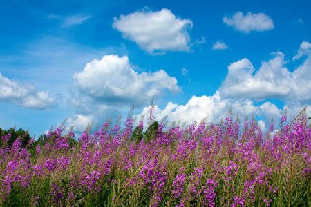 Scenery with wildflowers   photo