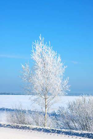 Winter landscape . Forest in a hoarfrost and snowdrift Stock Photo - 11340100