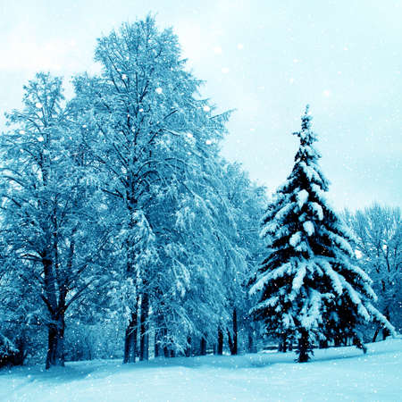 forrest: Winterlandschap. Bos in een rijp en Snowdrift