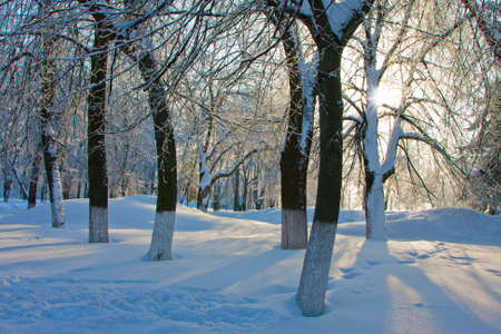 Winter landscape with trees in the park in sunny cold day photo