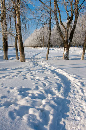 Winter landscape with trees in sunny cold day photo