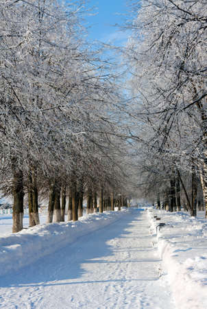 Winter landscape with trees in sunny cold day Stock Photo - 11386612
