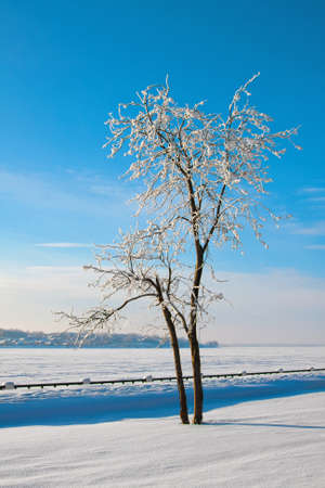Winter landscape with trees in sunny cold day on the river photo