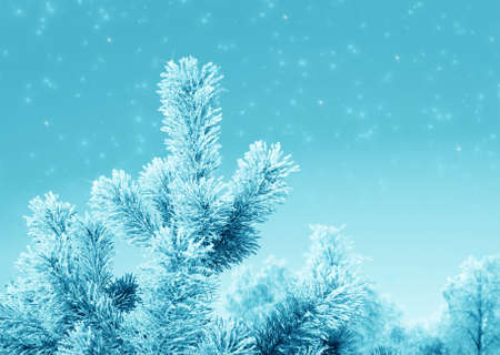 Christmas fantasy with  fir tree and snow in cold day