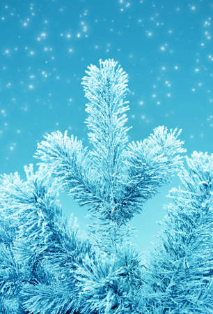 Christmas fantasy with  fir tree and snow in cold day Stock Photo - 11386526