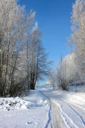 Winter scenery with trees in sunny cold day photo