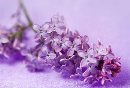 Bellas flores de color lila sobre fondo lila Foto de archivo - 11597851