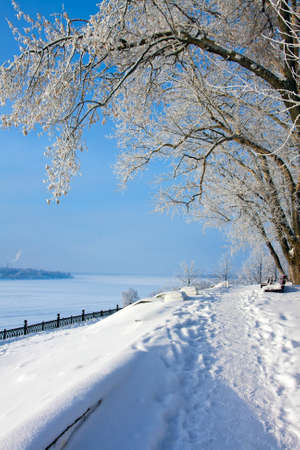 Winter  park, scenery with trees in sunny cold day Stock Photo - 11597849