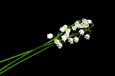 Spring flowers lily of the valley on black background Stock Photo - 12165704