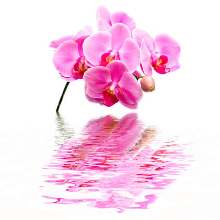 Beautiful flower Orchid, phalaenopsis, reflection in water photo