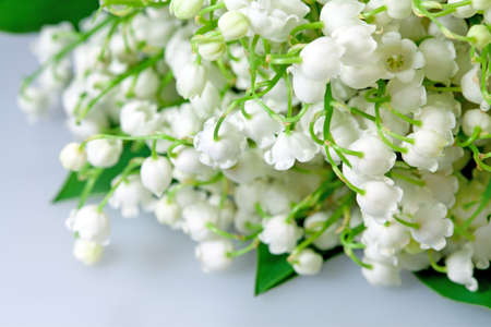 Spring flowers lily of the valley on grey background photo