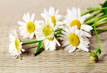 Flowers of camomile  ox-eye daisy   photo