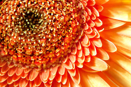 Flower gerbera, macro shot, natural background for card Stock Photo - 12639210