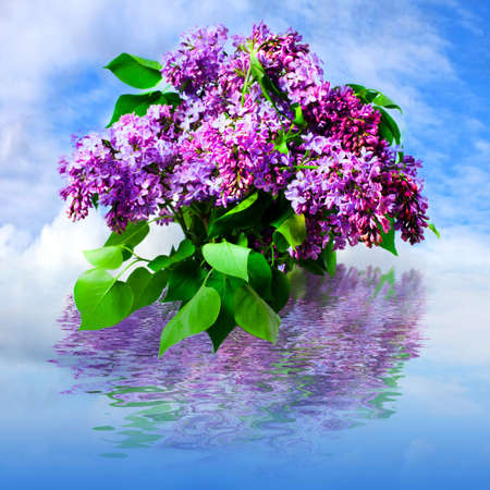 Beautiful flowers of lilac, reflection in water  photo