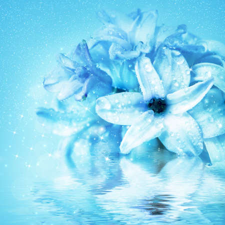 Beautiful flowers hyacinth, reflection in water waves photo