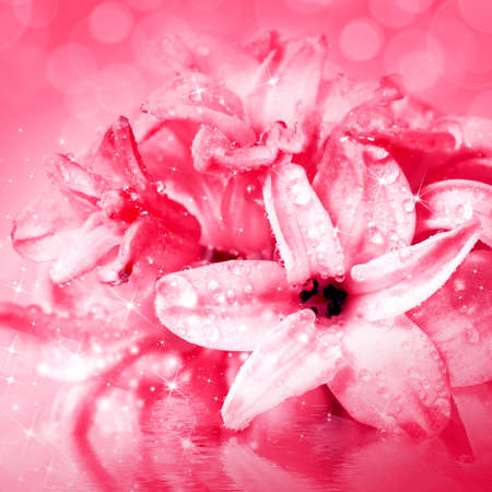 cd cover: Beautiful flowers hyacinth, reflection in water waves
