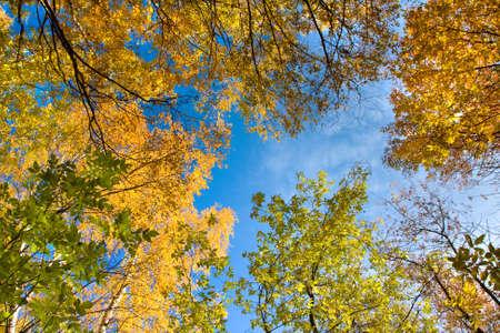 Autumn season, trees, fall leaves and sky photo