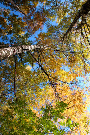 Autumn season, trees, fall leaves and sky photo