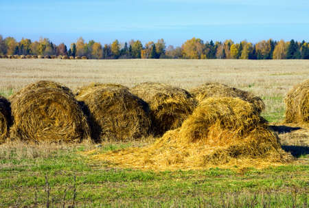 haystack:  Hayrick in a field, autumn season in country Stock Photo