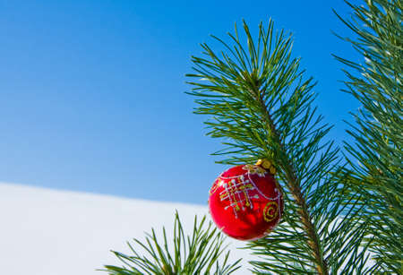 Glass ball on christmas tree, nature outdoor photo
