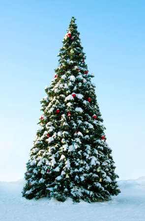 christmas decorations with white background: Big Christmas tree on snow, background of blue sky
