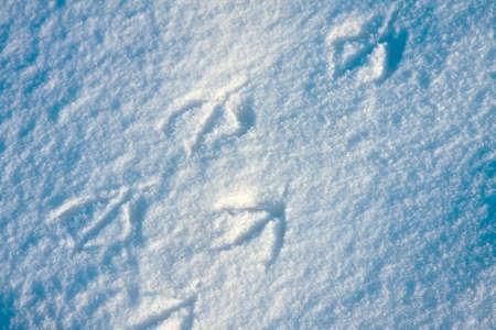 vogelspuren: Natürlichen Hintergrund von Schnee close-up, kalten Winter Tag