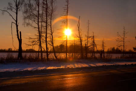 Winter sunset in forest in cold evening Stock Photo - 16566620
