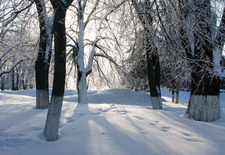 Sunny light and snowdrifts in a winter forest Stock Photo - 16563178