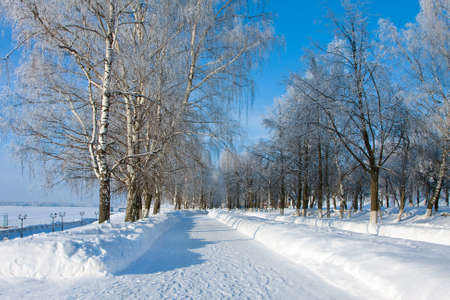 Winter landscape with trees on alley in sunny cold day photo