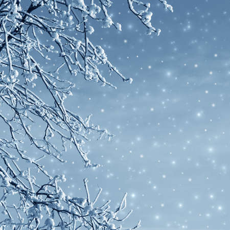 Misty winter picture with tree, snow and hoarfrost Stock Photo - 16566587