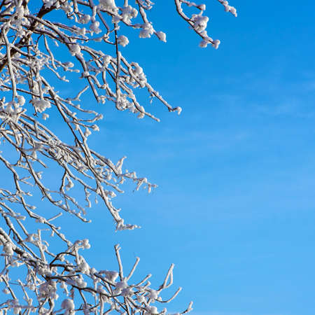 Frosty tree and blue clear sky close-up photo