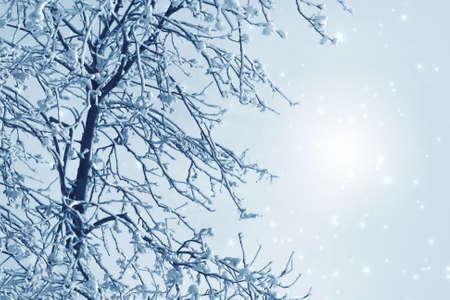 bosque con nieve: Imagen Misty invierno con el �rbol, la nieve y la escarcha Foto de archivo
