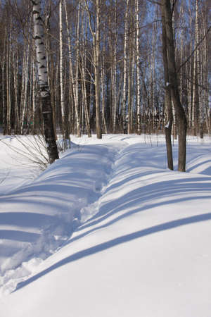 Sunny light and snowdrifts in a winter forest photo