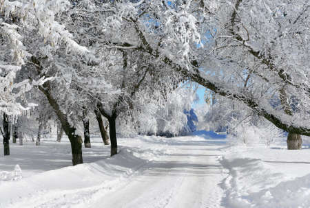 Winter  park, scenery with trees in sunny cold day Imagens