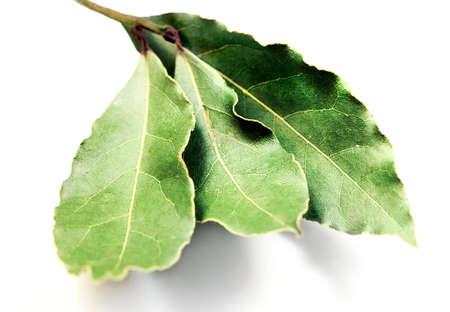 Ingrediënten - laurierblad (laurel) geïsoleerd via witte achtergrond