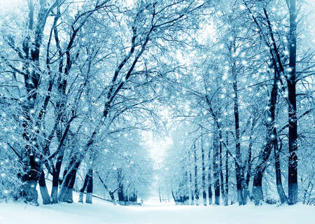 Winter scenery, frosty trees in a city park