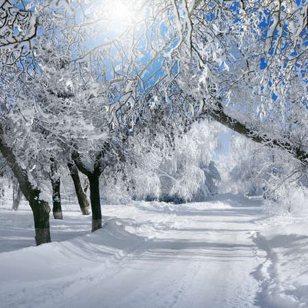 Winter nature, scenery of woodland in sunny day