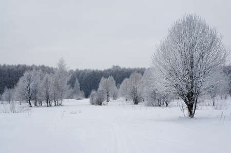 Winter nature, snow and snowy trees  in forest Stock Photo