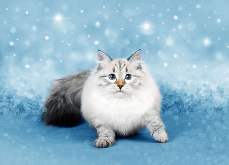 Christmas cat in a xmas magic decor