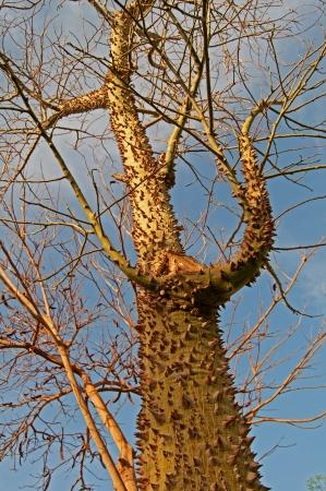 prickle: prickle tree