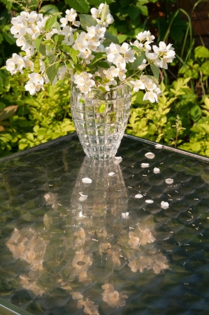 jasmin bouquet still life with reflection on the table photo