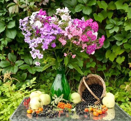 black currants: still life boquet of phloxes, apples and black currants Stock Photo