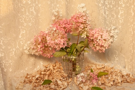 still life with pink hydrangea photo