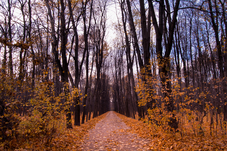 road autumnal: road in the autumnal forest