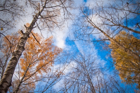 sky thought the autumnal trees photo