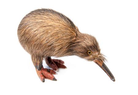 kiwi bird toy isolated on the white background photo
