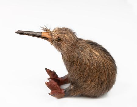 kiwi madár játék ül a fehér háttér