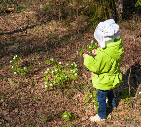 little kid girl collecting spring flowers rear view photo
