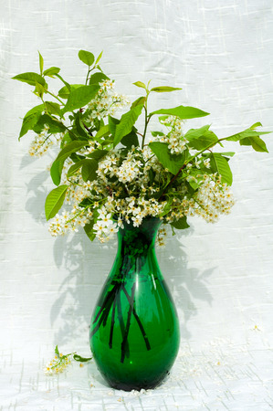 still life bouquet with bird cherry tree flowers in a green vase photo