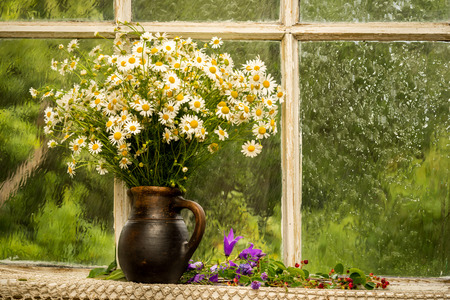 daisie: chamomiles on the window sill in a sunny rainy day
